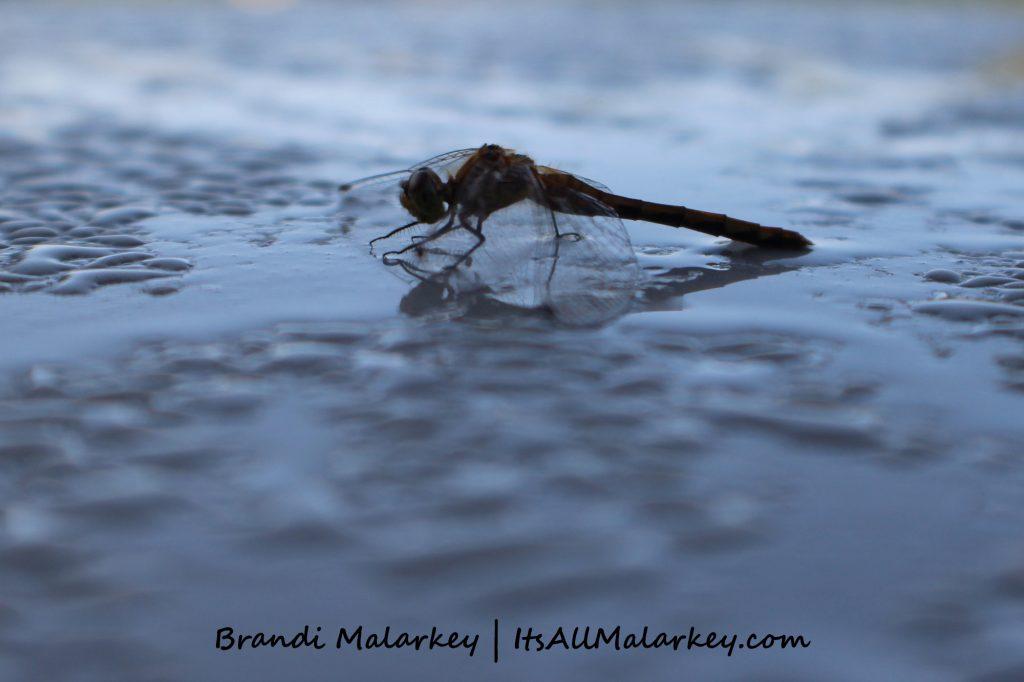 Gimli Dragonfly 2. Image taken at Gimli, Manitoba, near Lake Winnipeg, Canada. Brandi Malarkey, artist. ItsAllMalarkey.com