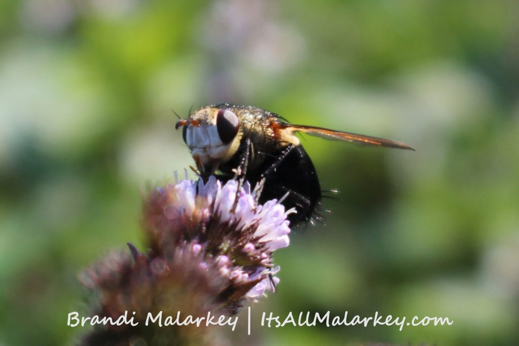 Image taken at the ABC Gardens at Yunker Farm in Fargo, North Dakota. Brandi Malarkey, Artist. ItsAllMalarkey.com
