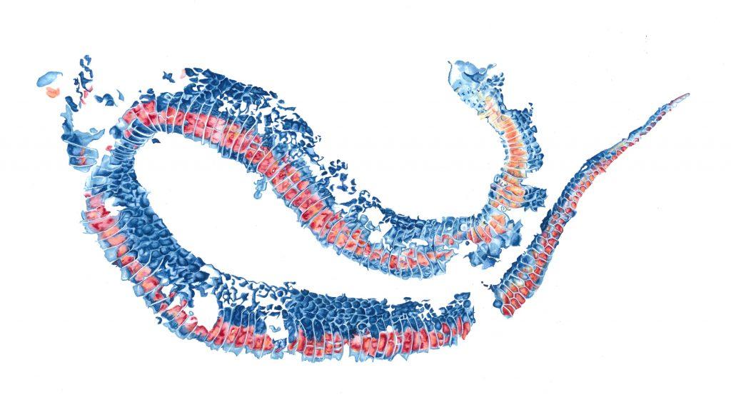 Snake Skin, inspired by Maplewood State Part. Brandi Malarkey, artist. ItsAllMalarkey.com