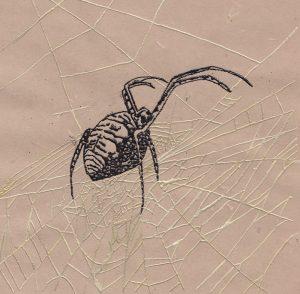 Garden Spider 1. Thermography 6x6 Brandi Malarkey, Artist. ItsAllMalarkey.com