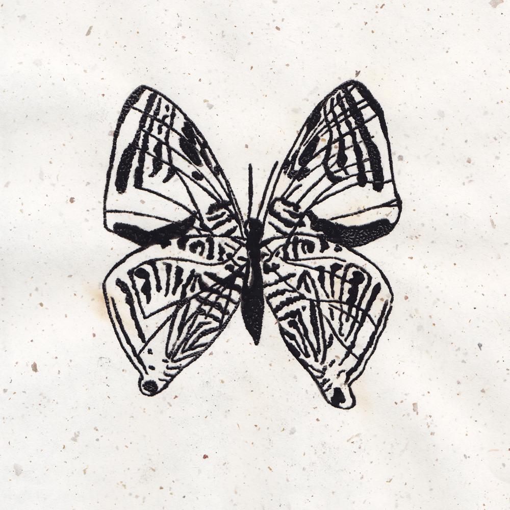 Colobura annulata. Thermography 9x9 Brandi Malarkey, Artist. ItsAllMalarkey.com
