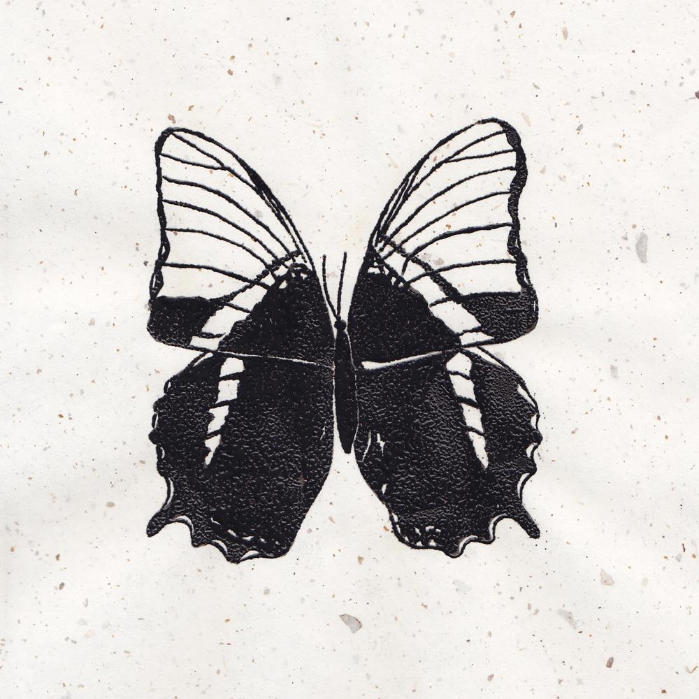 Siproeta epaphus. Thermography 9x9 Brandi Malarkey, Artist. ItsAllMalarkey.com