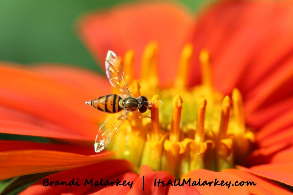 Image taken at the Northern Plains Botanical Garden at Yunker Farm, Fargo. Brandi Malarkey, artist. ItsAllMalarkey.com