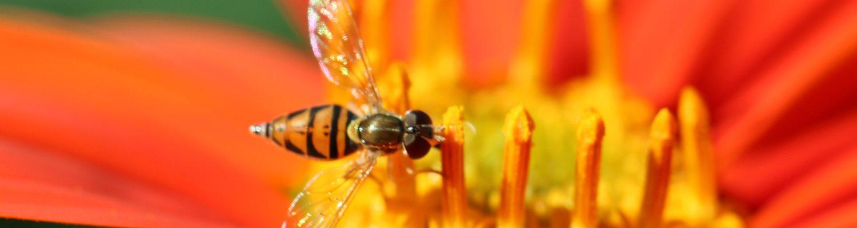 Image taken at the Northern Plains Botanic Garden at Yunker Farm, Fargo. Brandi Malarkey, artist. ItsAllMalarkey.com