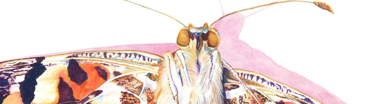 Painted Lady. Gouache on paper. 11x15. Brandi Malarkey, artist. ItsAllMalarkey.com