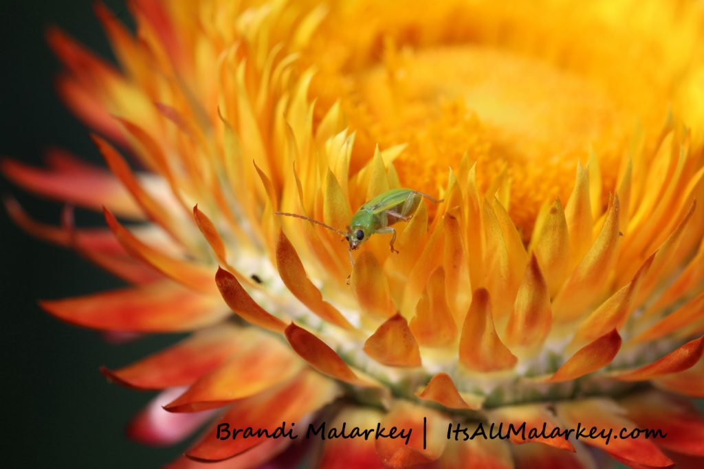 Image taken at the Northern Plains Botanic Garden at Yunker Farm, Fargo. Brandi Malarkey, artist. ItsAllMalarkey.com