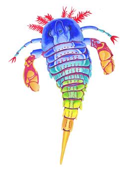 """Eurypterid. """"Sea Scorpion"""". Gouache on paper. 12.5x18 Brandi Malarkey, artist. ItsAllMalarkey.com"""