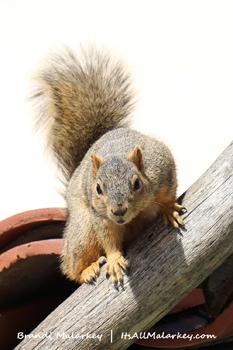 Squirrel. Image taken at the Spanish Village Art Center at Balboa Park. Brandi Malarkey, artist. ItsAllMalarkey.com