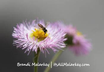 Hoverfly on flower. Brandi Malarkey, artist. ItsAllMalarkey.com